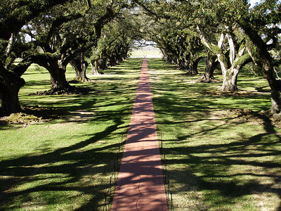 The Oaks of the Oak Alley Plantation - Vacherie, LA ... February 27, 2006 ... Photo by Rob Page III