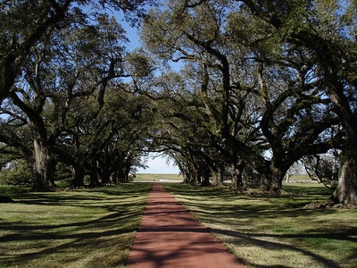 The Oak Alley Plantation - Vacherie, LA ... February 27, 2006 ... Photo by Emily Conger