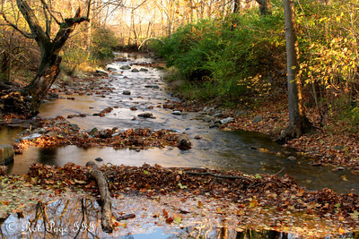 Autumn along the creek - Frederick, MD ... November 7, 2009 ... Photo by Rob Page III