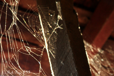 Spider-webs inside the Utica covered bridge - Frederick, MD ... November 7, 2009 ... Photo by Rob Page III