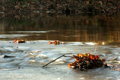 Caught in the stream's grasp - Frederick, MD ... November 7, 2009 ... Photo by Rob Page III