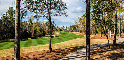 fallen-oak-golf-photography--5