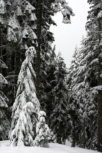 A snowy morning greets us - Mt. Hood, OR ... May 5, 2012 ... Photo by Rob Page III