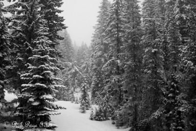 A snowy forest. On a clear day Mt. Hood nestles itself in the opening, but the weather did not co-operate - Mt. Hood, OR ... May 4, 2012 ... Photo by Rob Page III