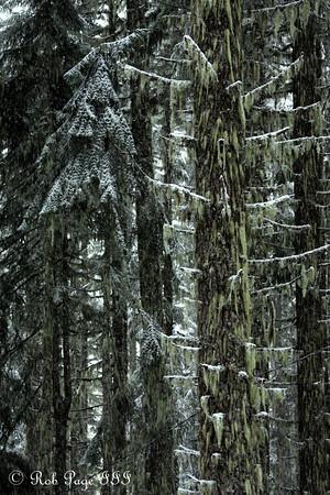 Mt. Hood - 2012