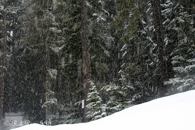 The snow comes down - Mt. Hood, OR ... May 4, 2012 ... Photo by Rob Page III