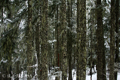 A snowy forest - Mt. Hood, OR ... May 4, 2012 ... Photo by Rob Page III
