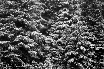 Fresh snow in the forest - Mt. Hood, OR ... May 4, 2012 ... Photo by Rob Page III