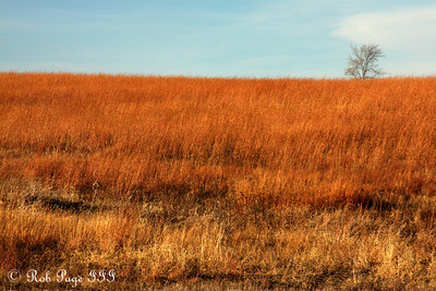 The prairie - Denton, NE ... November 27, 2010 ... Photo by Rob Page III