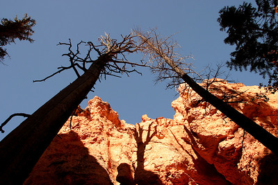 Bryce Canyon (Panetta)