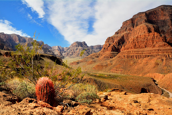 Red Cactus and Canyon
