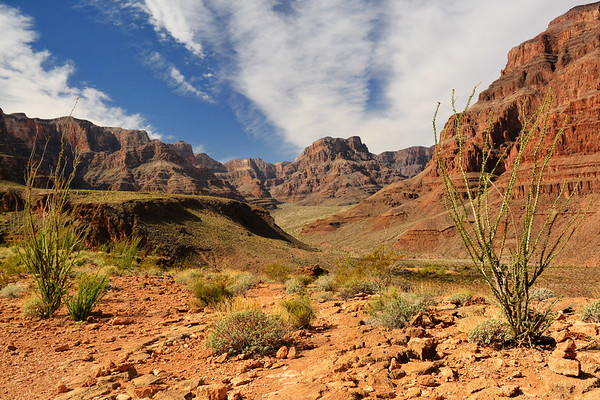 Cactus and Canyon