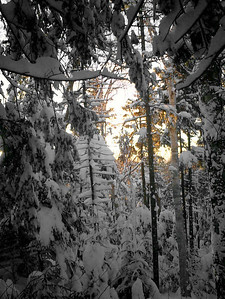 The Snow - Randolph, NH ... February 11, 2005 ... Photo by Rob Page III