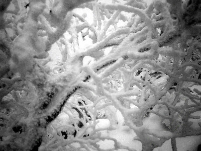 The SNOW - NH ... February 12, 2005 ... Photo by Rob Page III