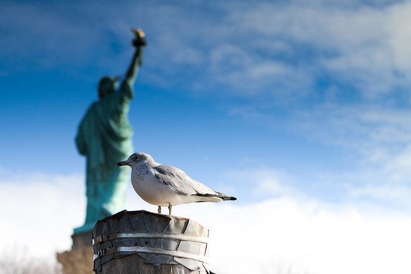 Seagull at Liberty