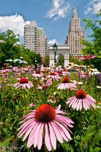 Flowers blooming in Washington Square Park