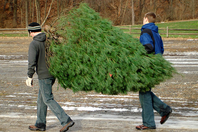 Rob and John carrying the Christmas tree to the car - Novelty, OH ... December 22, 2007