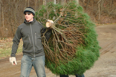Carrying the Christmas tree - Novelty, OH ... December 22, 2007