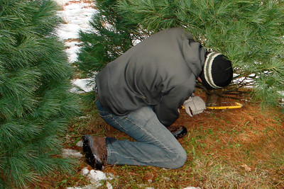 Cutting down the tree - Novelty, OH ... December 22, 2007