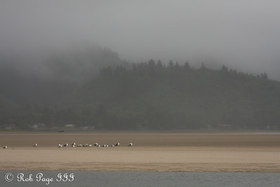 The Oregon Coast - Day 1