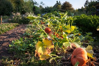 Pumpkins -- McMenamins Edgefield