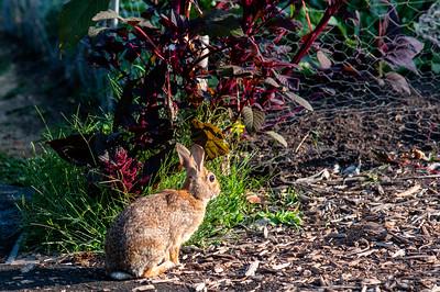 Rabbit -- McMenamins Edgefield