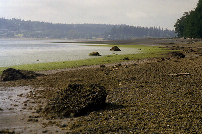 Whidbey Island, Washington ... July 2000