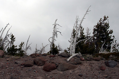 The windswept landscape - Mt. Hood, OR ... June 28, 2007 ... Photo by Nicole Page
