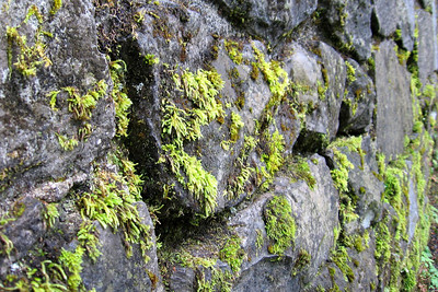 Along the wall - Multnomah Falls, OR ... June 29, 2007 ... Photo by Jon Addair