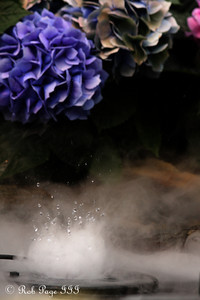 A fountain erupts at the Phipps Conservatory - Pittsburgh, PA ... January 8, 2011 ... Photo by Rob Page III
