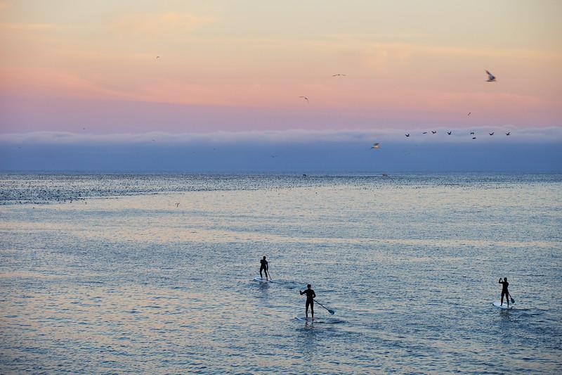 Seabird feeding Frenzy, Santa Cruz and paddle boarders