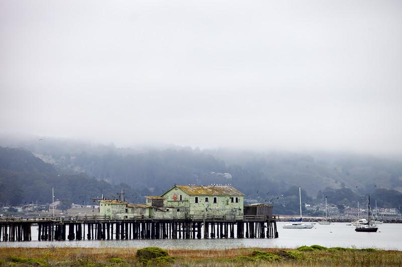 Foggy day at Half Moon Bay