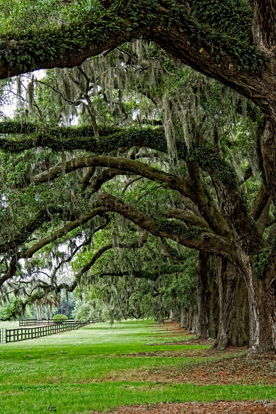 Boone Hall Plantation and Gardens. Mt. Pleasant, South Carolina.