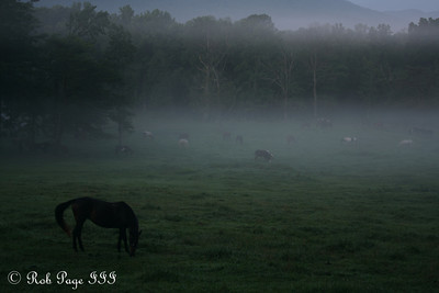 Cades Cove - Great Smoky Mountain NP, TN ... August 2, 2011 ... Photo by Rob Page III