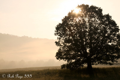 Cades Cove - Great Smoky Mountain NP, TN ... August 2, 2011 ... Photo by Emily Page