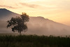 Great Smoky NP, Cades Cove - Misty sunrise with lone tree