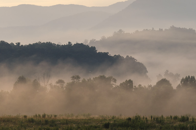 Great Smoky NP, Cades Cove - Morning fog layering against trees at sunrise