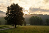 Great Smoky NP, Cades Cove - Old road through meadow at sunrise