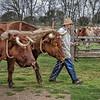Farmer and Oxen