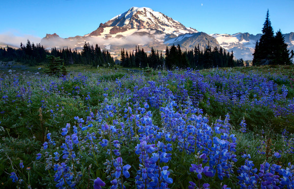 Spray Park - Mt. Rainier National Park, Washington