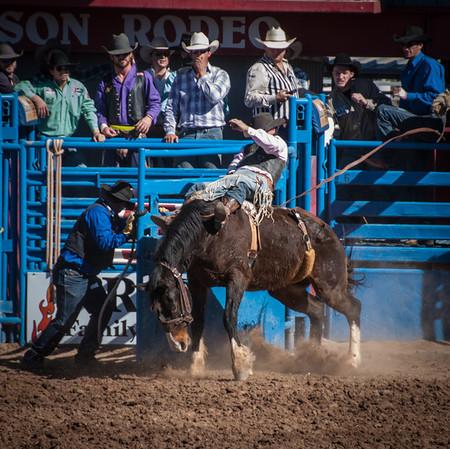 Ride 'Em Cowboy, Rodeo, Tucson
