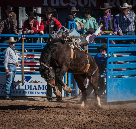 Out Of The Gate, Rodeo, Tucson