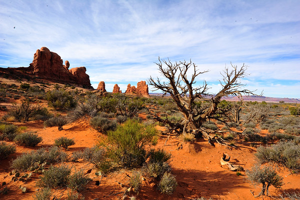 Arches and Dead Tree