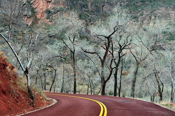 Trees on Road in Zion2