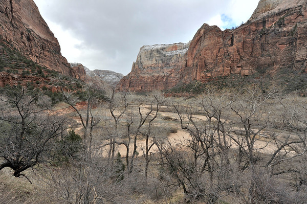 Canyon in Zion