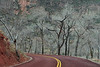 Trees on Road in Zion