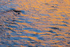 Zion, Angel's Landing - Colorful ripples in Virgin River at sunset
