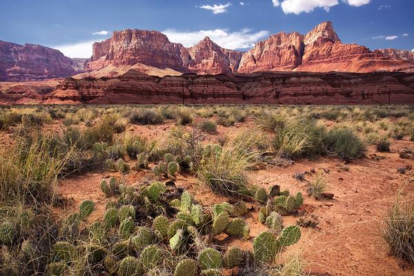 Desert scrub at Vermillion Cliffs