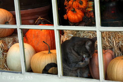 Don't mind me here in the window - Alexandria, VA ... November 5, 2011 ... Photo by Rob Page III