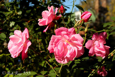 Flowers - Alexandria, VA ... November 5, 2011 ... Photo by Rob Page III